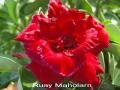 ruay-maholarn