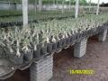 kesornthip-nursery2