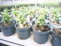 pnw-a5-seedling