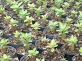 rcn-baby-seedling-group