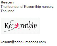 kesorthip - adenium