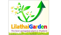 lilathaigarden - adenium
